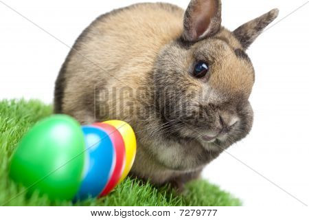 Easter Bunny In Green Spring Meadow With Colored Easter Eggs