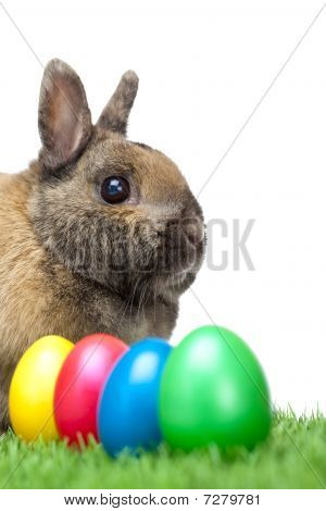 Easter Bunny In Grass Beside Green, Red, Yellow, Blue Easter Eggs