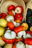 image of turban  - Turks turban winter squash is also called Mexican hat - JPG