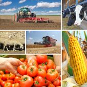 stock photo of cow  - Agriculture collage food production - JPG