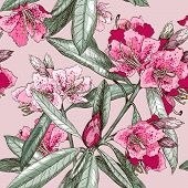 stock photo of oleander  - Vector Seamless pattern with Oleander flower - JPG