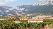 stock photo of calatrava  - Alavesa vineyards and bodegas in the Alava region of La Rioja - JPG