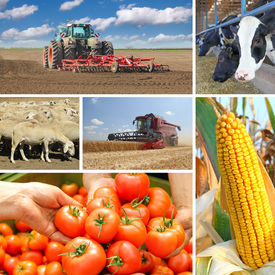 picture of food plant  - Agriculture collage food production - JPG