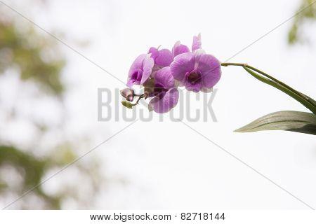 Orchids.