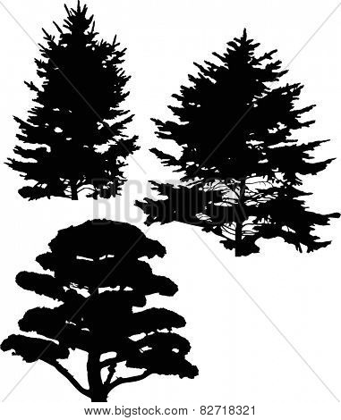 illustration with pine and fir tree silhouettes isolated on white background