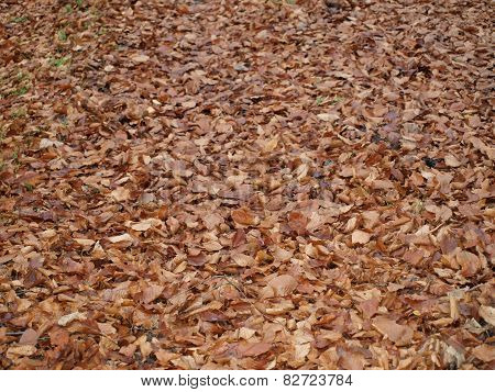 layer of leaves in autumn