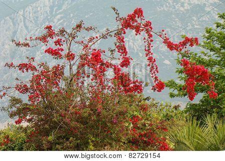 bush blooming red flowers