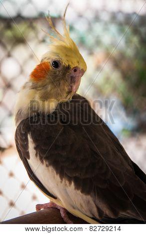 Portrain Of A Parrot