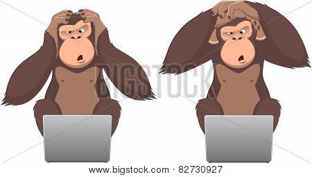 Monkey and computer