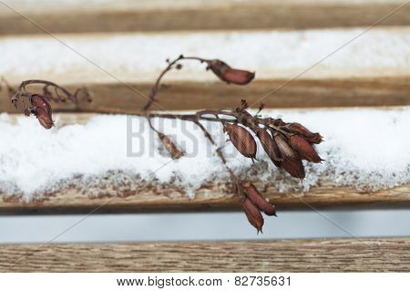 Twig With Dried Seeds, Flowers And Fruits. Wooden Snow Covered Bench Background. Retro (pastel) Colo