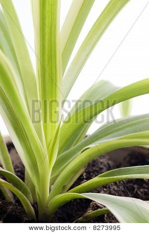 Green Plant Growing