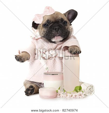 French Bulldog Puppy With Cosmetic Products