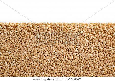 Wheat Pile Heap With Copy Space