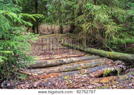 Old log bridge.