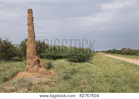 Termitary