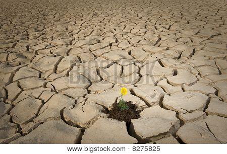 gelbe Blume geknackt Boden