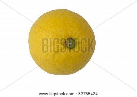 Lemon Citrus Vitamin C Organic Isolated White Background