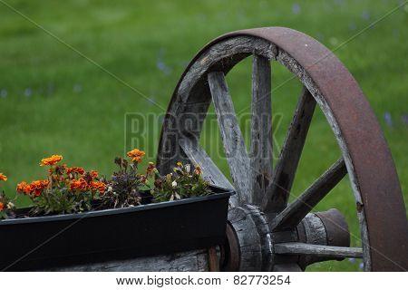 Flower Wheels