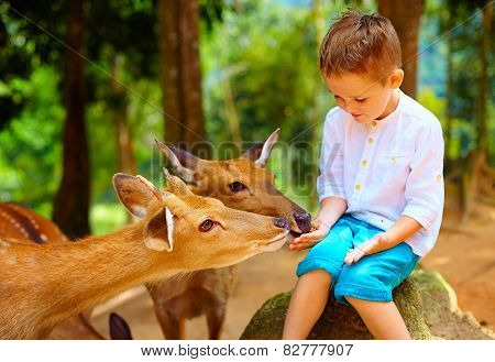 Cute Boy Feeding Young Deers From Hands. Focus On Deer