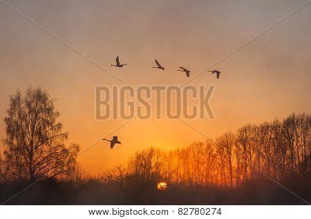 Swan Fly Mist Winter Sunset