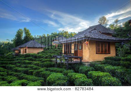 Tea Plantation And Hut In Ban Rak Thai