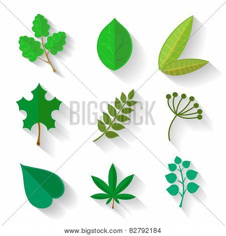 Set of leaves  various trees. Isolated green leave on a white background.