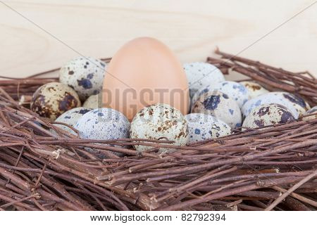 Small quail eggs and big hen's egg