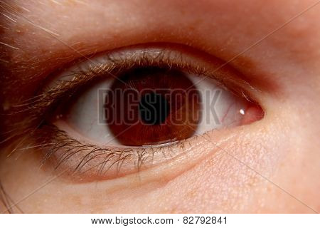 Narrow Brown Eye Close-up