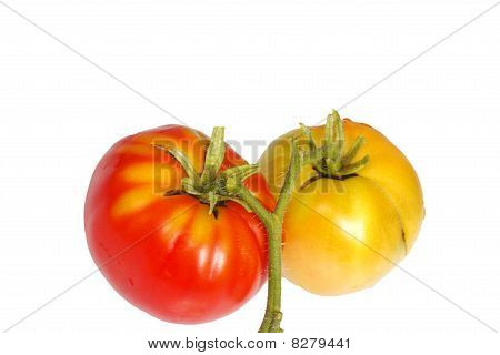 Fresh Tomatoes Red And Brown