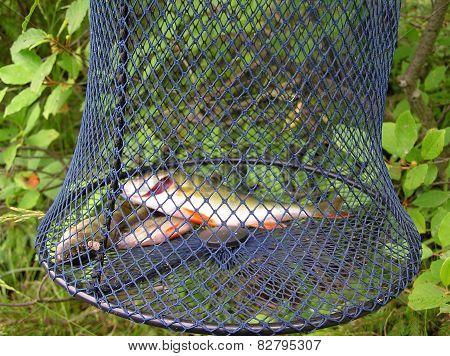 Perch in the cage