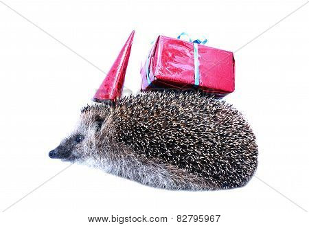 Little Forest Hedgehog In A Festive Hat And With A Gift Isolated