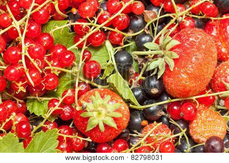 Berry mix of strawberry, black and red currant