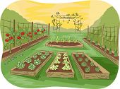 stock photo of vines  - Illustration of a Kitchen Garden Lined Up With Fruits and Vegetables - JPG