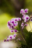 stock photo of orquidea  - stock photo orchid colorful with pink purple white and green shade under the sunlight - JPG