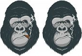 foto of chimp  - Vector illustration - JPG