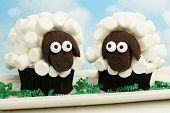 stock photo of spring lambs  - Two fun Easter lamb cupcakes with sky background - JPG