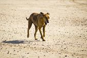 picture of greyhounds  - Dog  - JPG