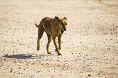 image of greyhounds  - Dog  - JPG