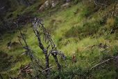 pic of dead plant  - Dead plants in a Swedish bog in V - JPG
