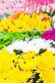 image of vivid  - Colorful background of vivid flowers in a bloom - JPG