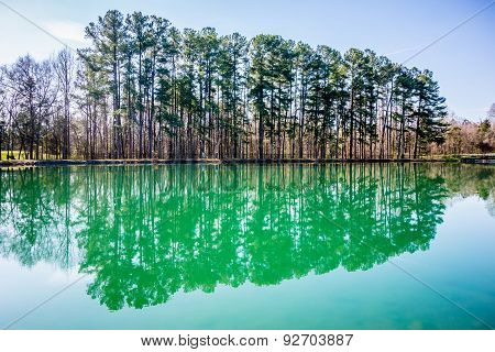 Evergreens Reflecting In A Pond In Spring On A Sunny Day