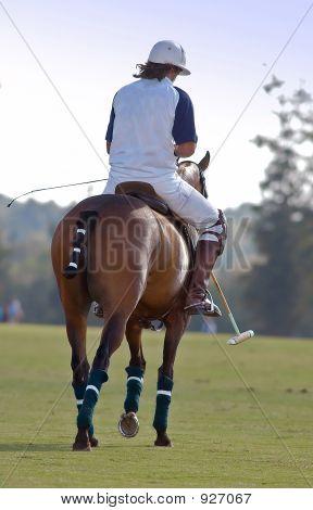 Polo Rider Takes A Break