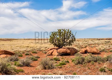 Lone Tree Grwong Between Rocks In Arizona Desert