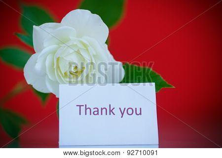 White Beautiful Rose