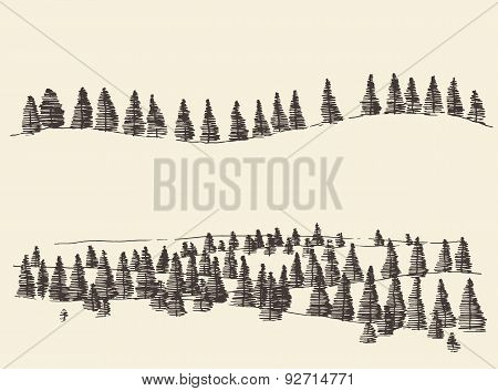 Fir Forest Contours Engraving in Mountains