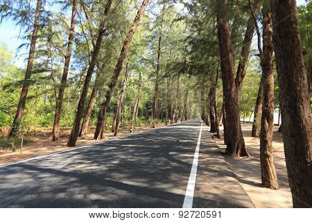 Coniferous forest Road