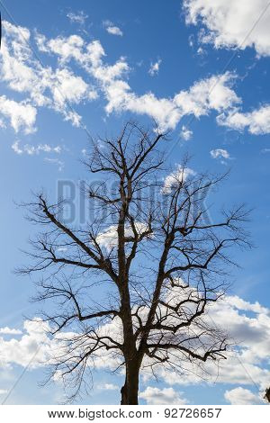 Leafless Tree Reaching Towards A Blue Cloudy Sky