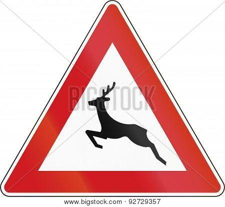 Wild Animals Crossing In The Czech Republic