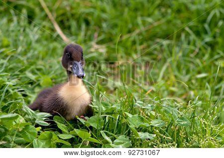 Favorite Blue Ducks