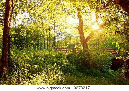 Nature Summer.